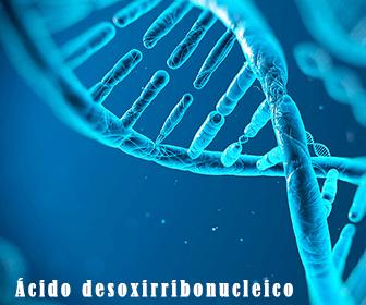 significado de ADN