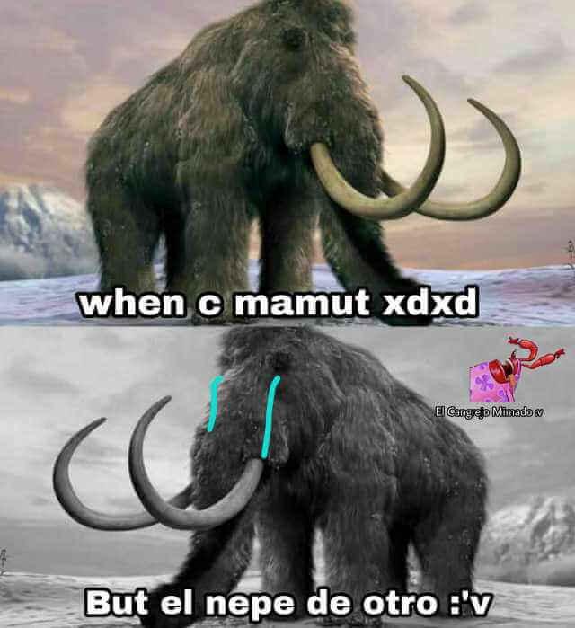 Que significa C mamut